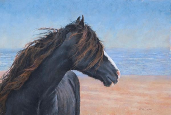 Sable Island 27 - Wistful