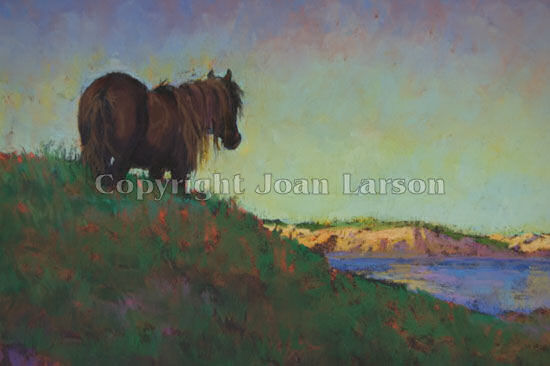 Sable Island #6 Stallion on the Hill at Sunset