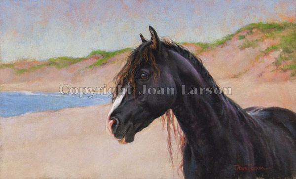 Sable Island 9 - The Black Stallion
